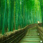 arashiyama 2