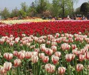 tulip four season hall 2