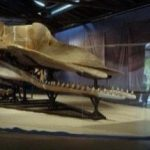 whale specimens