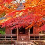 hiraizumi chusonji temple