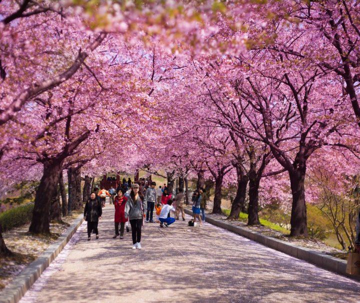 springkorea1