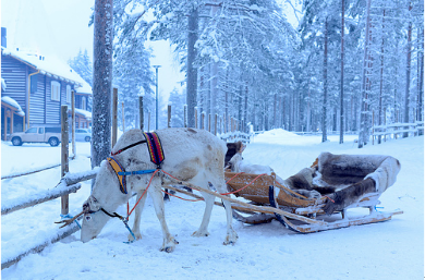 Experience the greatest Reindeer Safari in Lapland!