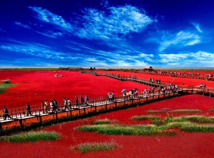 红海滩景区