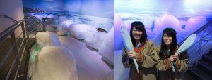 okhotsk drift ice museum