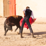 bull-fight