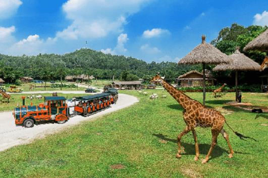 Chimelong Safari Park